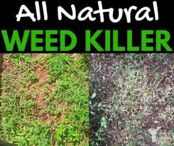 What is a natural weed killer for lawns?